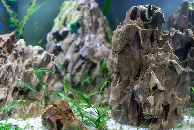 Kleine vissen in het aquarium. | Premium Foto