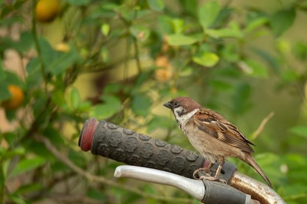 Kleine vogel die in de aard leeft Premium Foto