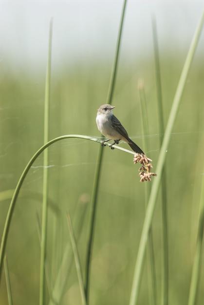 Kleine vogel die zich op het lange grasblad bevindt Gratis Foto