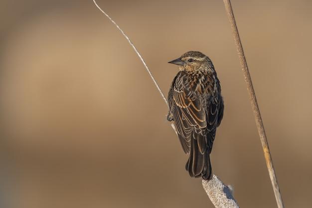 Kleine vogel zittend op een tak Gratis Foto