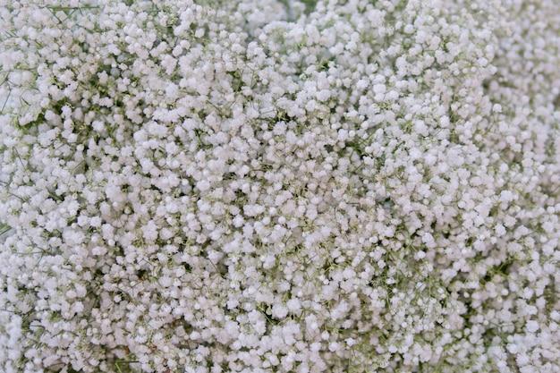 Kleine witte bloemen. paniculata flamingo Premium Foto