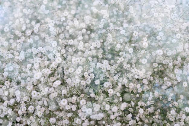 Kleine witte bloemen. Premium Foto