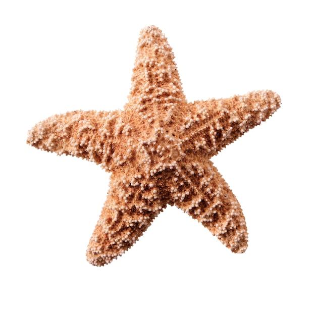 Kleine zeester seastar geïsoleerd op witte achtergrond Gratis Foto