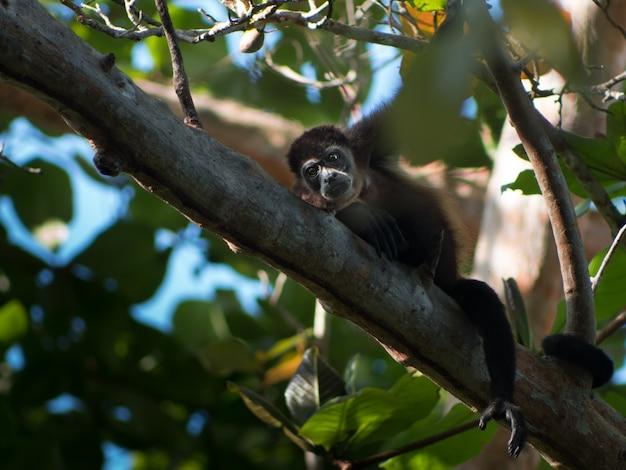 Kleine zwarte aap die op een boomtak rust in een bos Gratis Foto