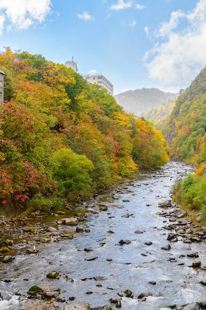 Kleurrijk bos op de herfstseizoen in jozankei Premium Foto