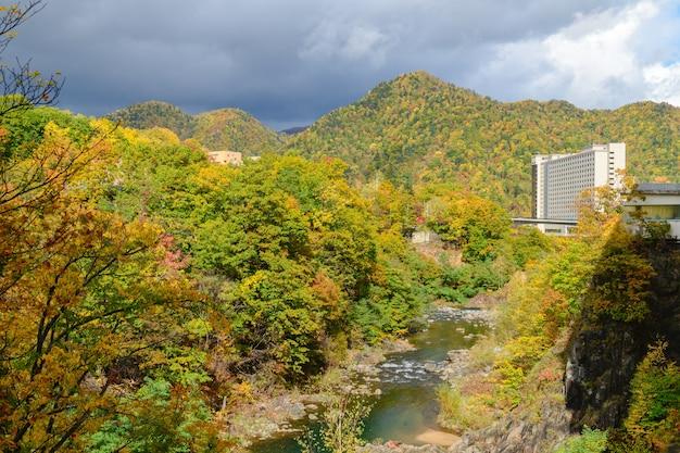 Kleurrijk bos op herfstseizoen in jozankei, Premium Foto