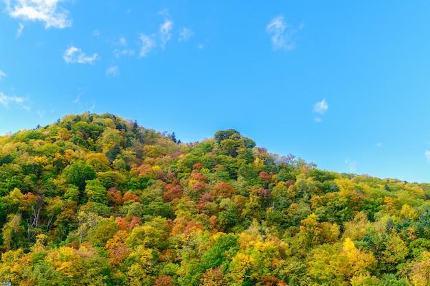 Kleurrijk bos op het seizoen van de bergherfst in jozankei, Premium Foto