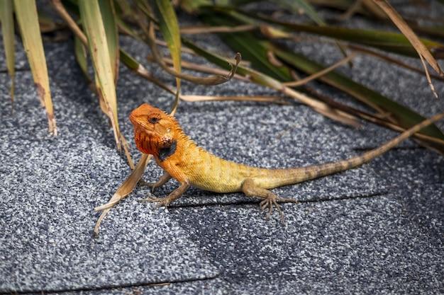 Kleurrijk reptiel met lange staart Gratis Foto