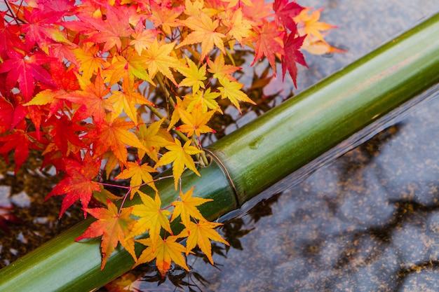 Kleurrijk rood en oranje esdoornblad op watervijver met groen bamboe in japanse tuin in de herfstseizoen. Premium Foto