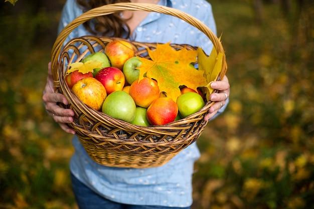 Kleurrijke appels in een mand in de handen van een boerin. Premium Foto