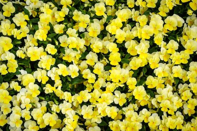 Kleurrijke bloemachtergrond in de tuin van de de zomerkas Premium Foto