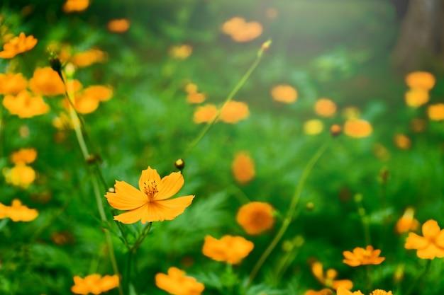 Kleurrijke bloemachtergrond Premium Foto