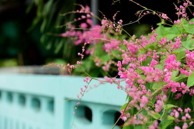 Kleurrijke bloemen in de natuur Premium Foto
