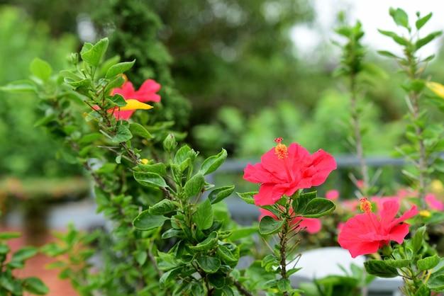 Kleurrijke bloemen in de tuin. mooie bloemen in de tuin. Premium Foto