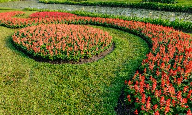 Kleurrijke bloemen in de tuin Premium Foto