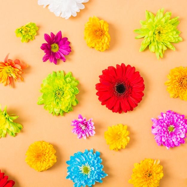 Kleurrijke bloemen op een oranje achtergrond Gratis Foto