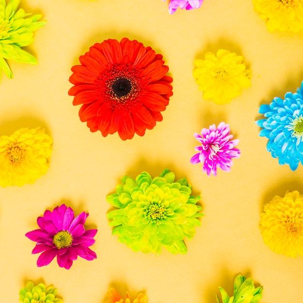 Kleurrijke bloemen op gele achtergrond Gratis Foto