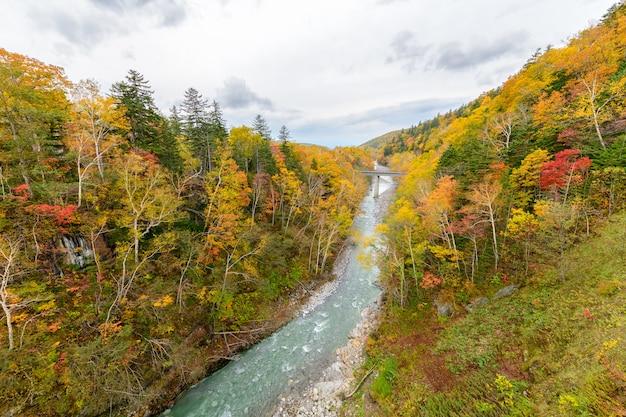 Kleurrijke boom in de herfst dichtbij shirahige-waterval Premium Foto