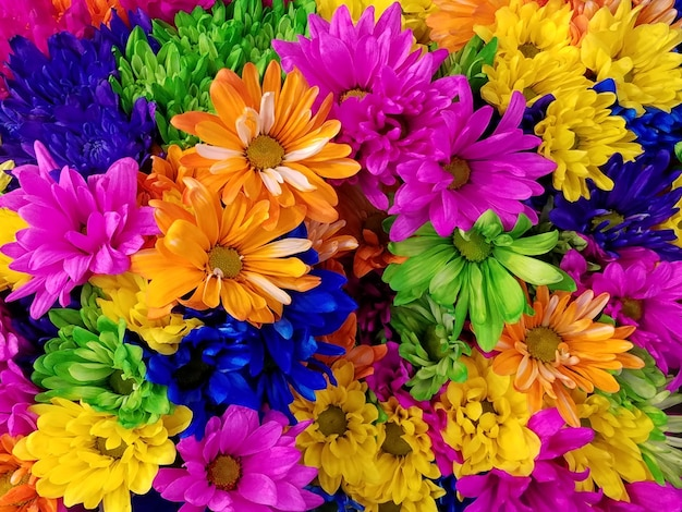 Kleurrijke chrysanten Gratis Foto