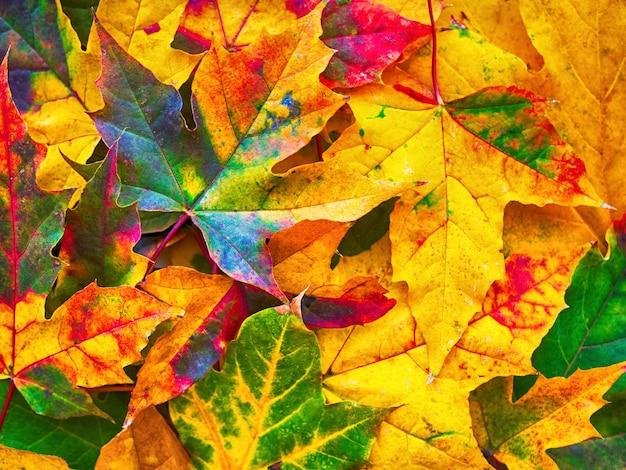 Kleurrijke herfstbladeren aard achtergrond Premium Foto