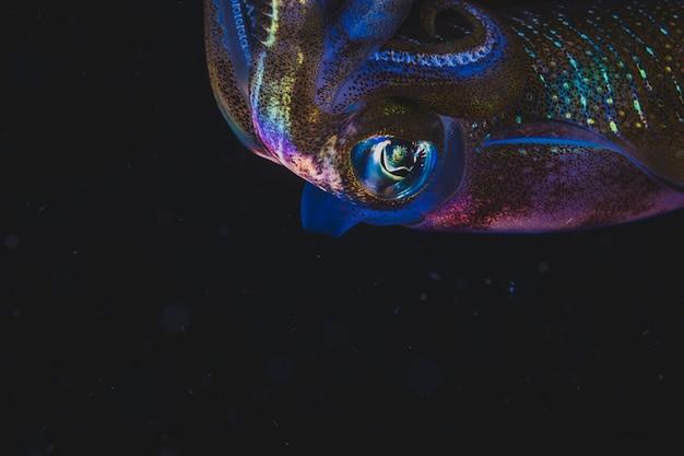 Kleurrijke inktvis zwemmen in duisternis Gratis Foto