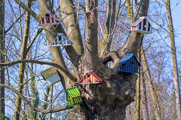 Kleurrijke nestkastjes op de kale takken van de boom Gratis Foto