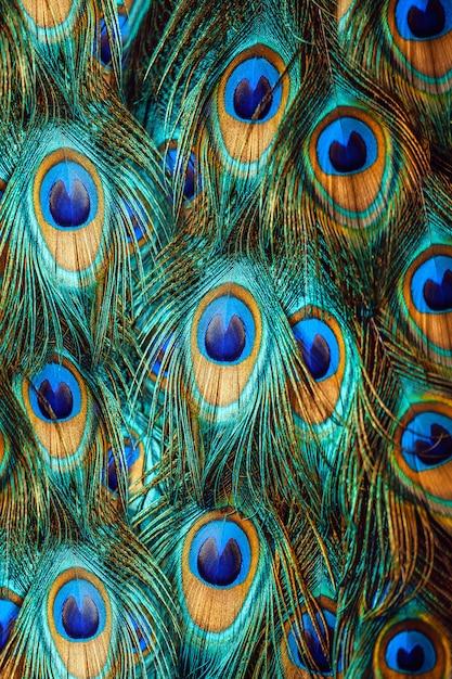 Kleurrijke pauwenveren Premium Foto