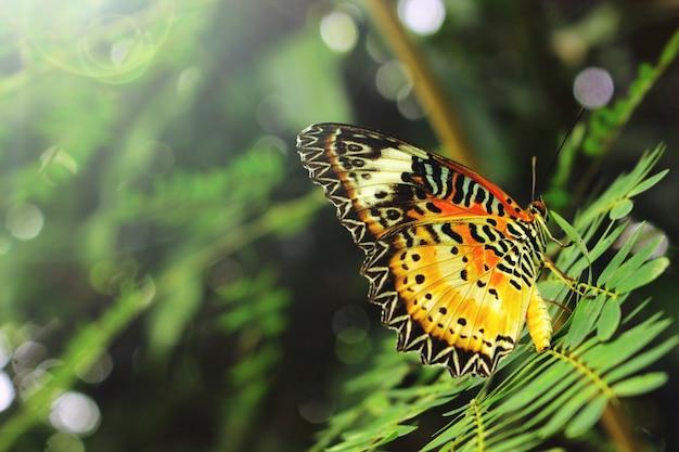 Kleurrijke vlinders op de bladeren. Premium Foto