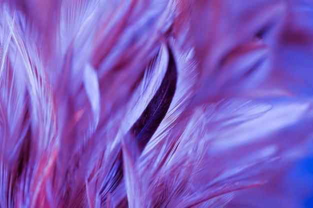 Kleurrijke vogel en kippenveren in zachte en onduidelijk beeldstijl voor de achtergrond, abstract art Premium Foto