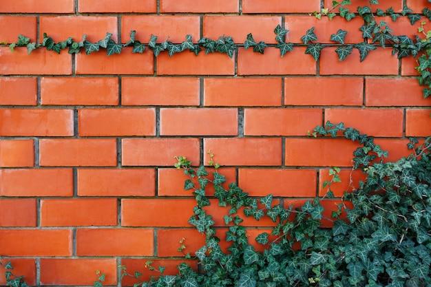 Klimopinstallatie op een rode bakstenen muur. Premium Foto