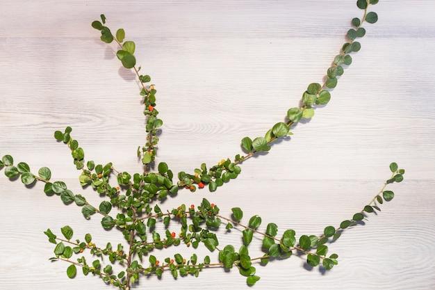 Klimplant het groeien op houten muur Gratis Foto
