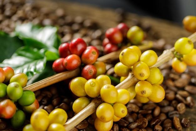Koffiebonen op koffie groene bladeren op houten achtergrond, verse koffiebonen op houten achtergrond Premium Foto