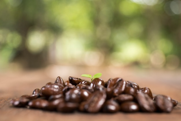 Koffieboom en koffieboon, concept Premium Foto