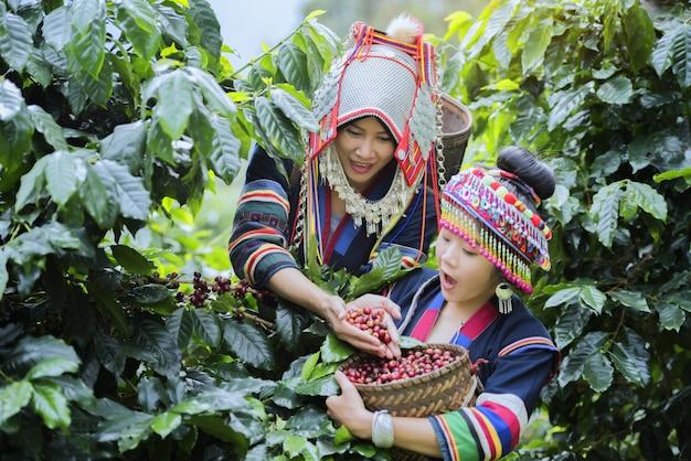 Koffieplantage Premium Foto