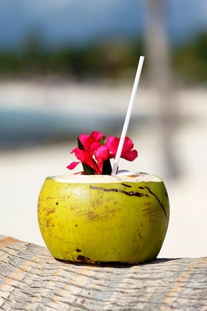 Kokosnoot met rietje op een palmboom aan zee Gratis Foto