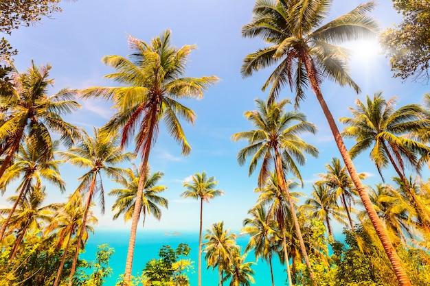 Kokosnotenpalmbomen en zee Premium Foto