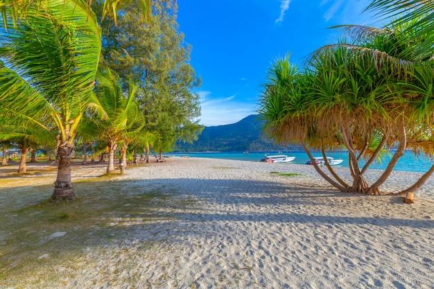 Kokospalmen op wit zandig strand en blauwe hemel in zuiden van thailand Premium Foto