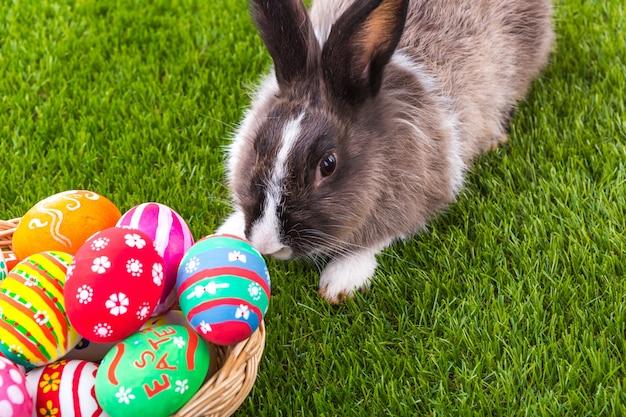 Konijn op het gras ruiken een easter egg Gratis Foto