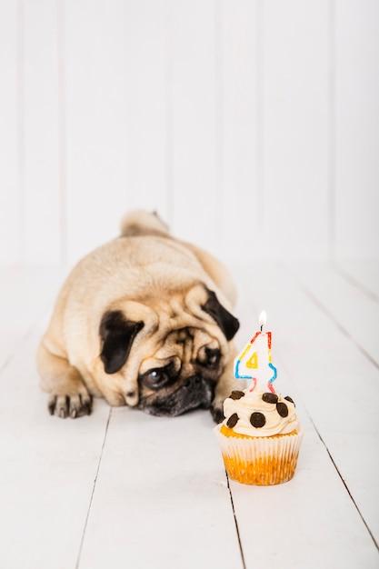 Kopieer ruimte hond met cake voor zijn vierde jaarviering Gratis Foto