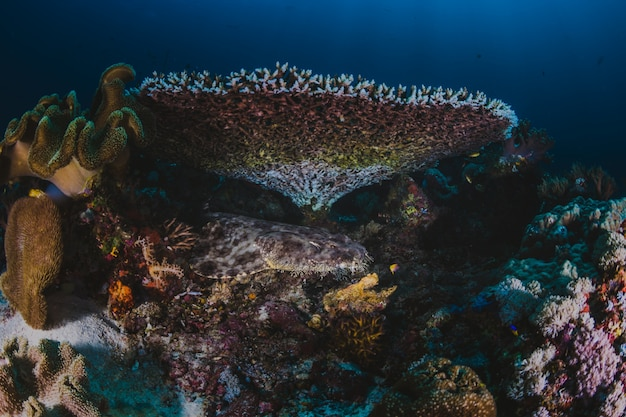 Koraalrif met vertakkende koraal en kleurrijke tropische vissen zwemmen Gratis Foto