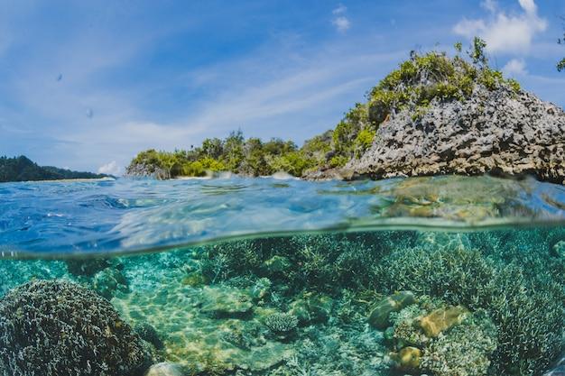 Koraalriffen onder het oppervlak van een eiland Gratis Foto