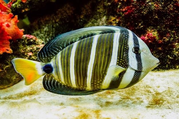 Koraalrifvissen met prachtige levendige kleuren Gratis Foto