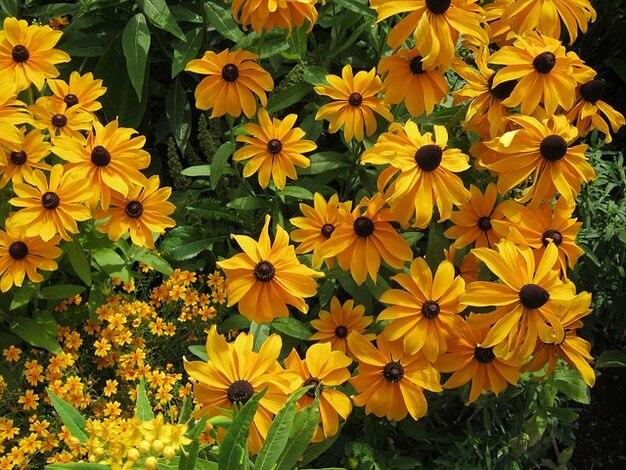 Kortingen bed bloemen bltenmeer decoratie foto gratis for Bloemen decoratie