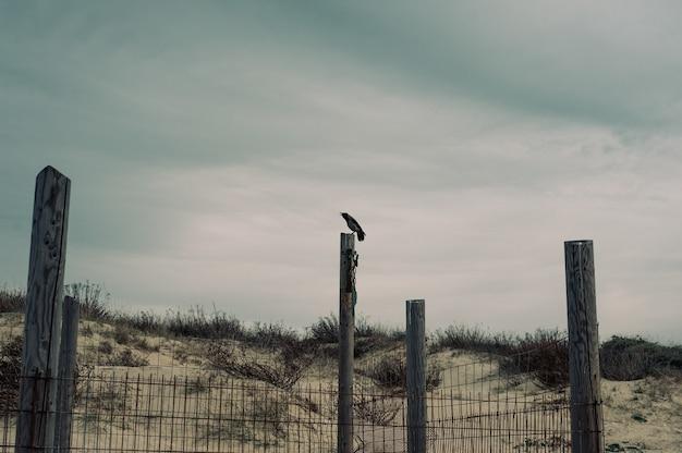 Kraai zittend op een houten kolom in een verlaten gebied Gratis Foto