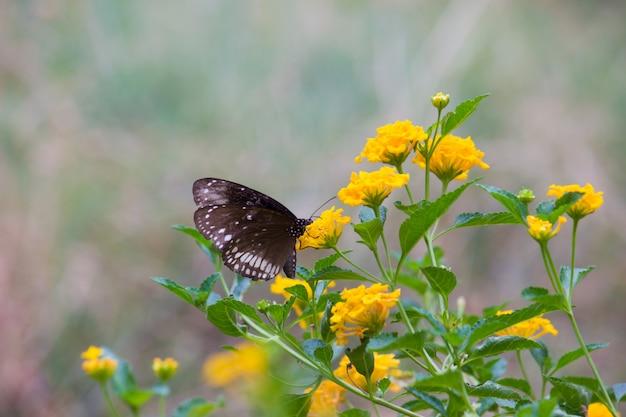 Kraaivlinder op de bloeminstallatie Premium Foto