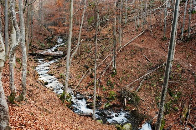 Kreek in het bos stroomt van top down achtergrondzonlicht en herfstbos. berg rivier Premium Foto