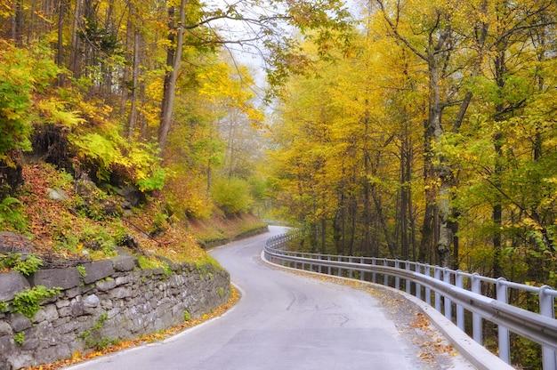Kronkelende weg door het bos Gratis Foto