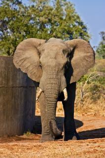 Kruger park olifant buitenkant Gratis Foto