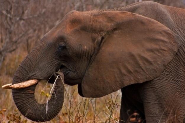 Kruger park olifant Gratis Foto