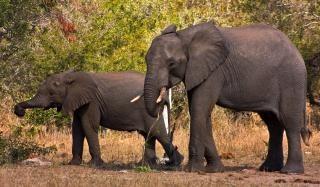 Kruger park olifanten nationale Gratis Foto
